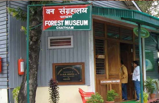 Andaman Lagoons - Popuplar Destination, City Tour, Place to Visit or Sightseeing - Forest Museum at Port Blair in Andaman Islands
